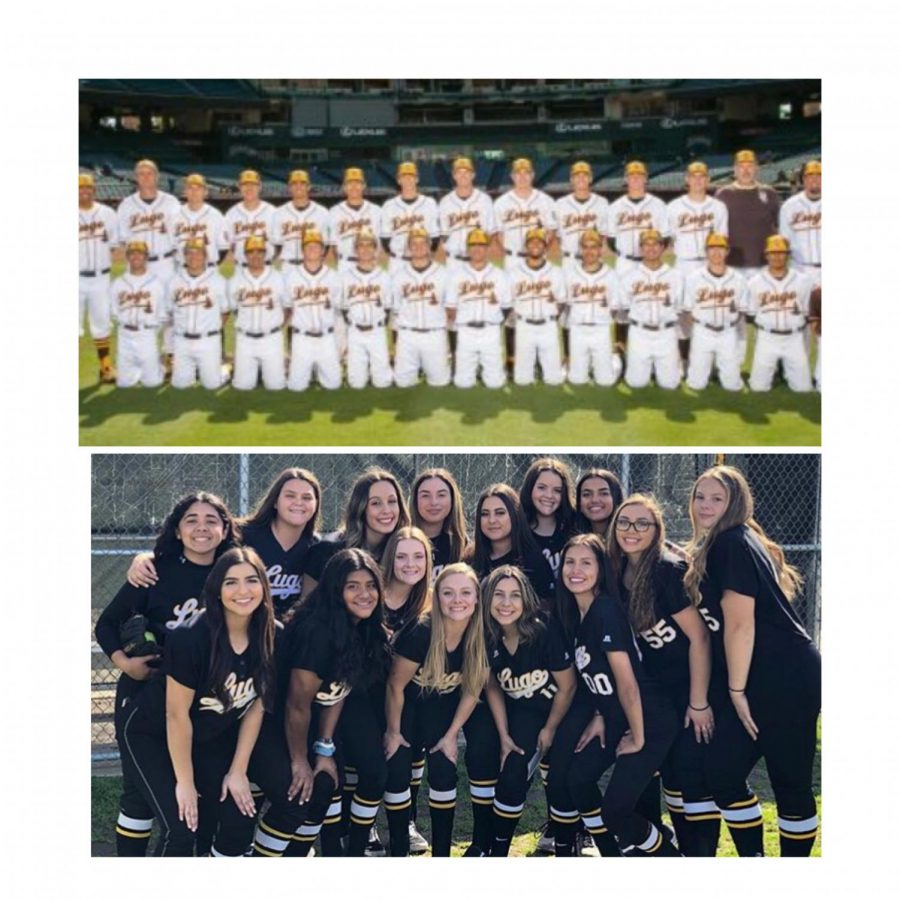 Baseball+%26+Softball%3A+A+season+to+remember